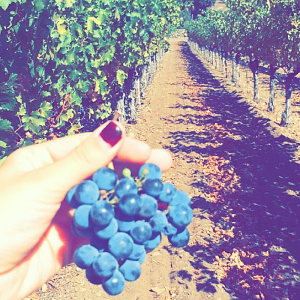 6 things you don't want to miss when traveling to Napa Valley