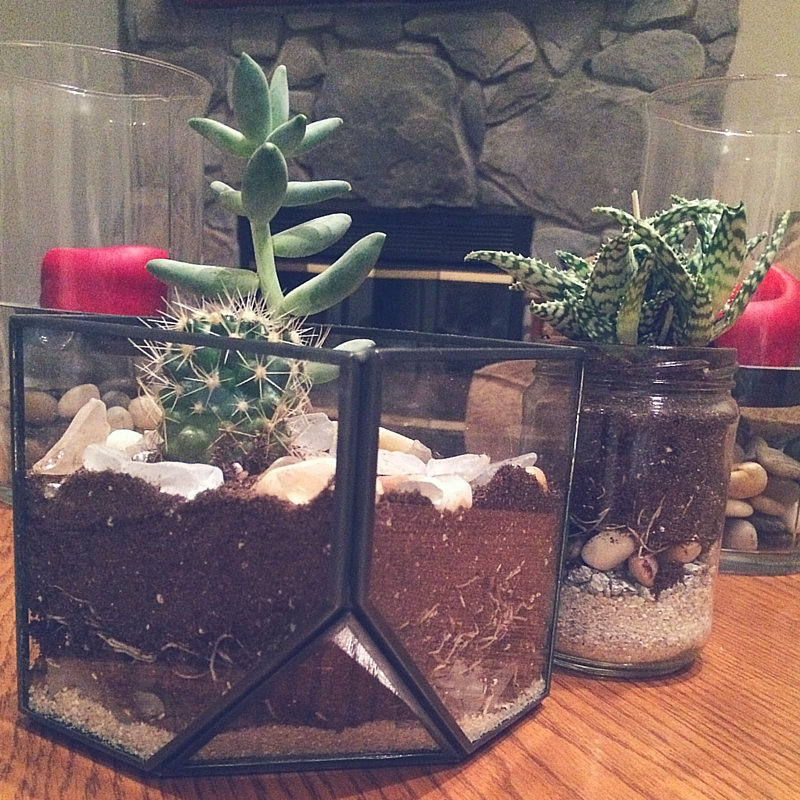 How to Make the Cutest Terrarium in Just 4 Simple Steps