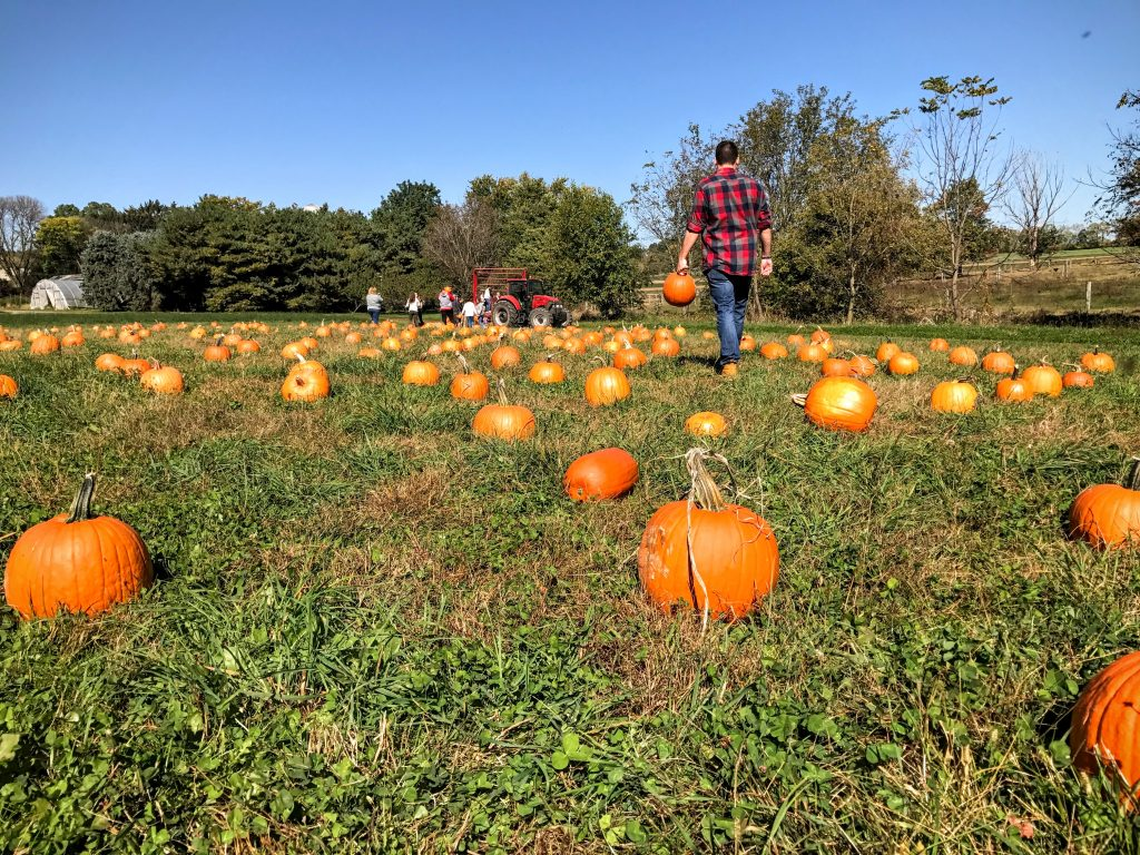 6 Things You Have To Do This Fall - pumpkin patch