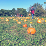 Fall Festivities: 6 Things You Have To Do This Fall