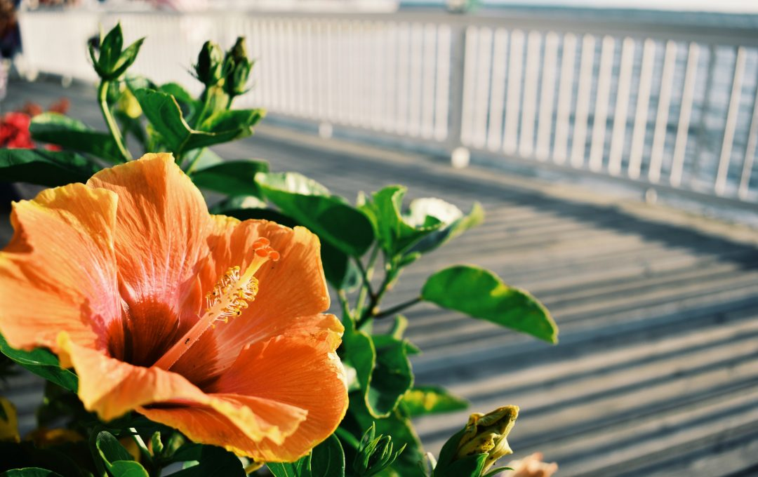beachy orange flower - yoga lessons